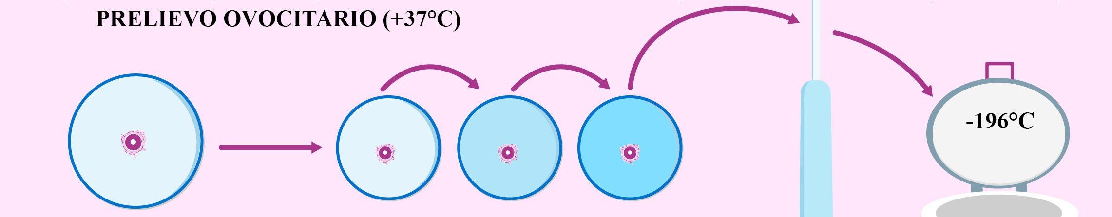 Congelamento ovuli